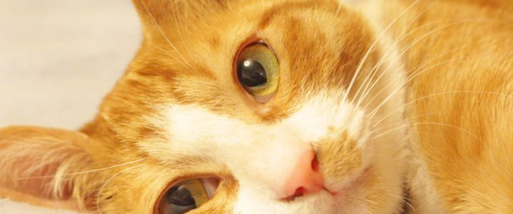 「猫プレミアム」の賃貸物件!