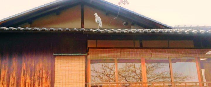 京都市は民泊も簡易宿所も増やしたくない!
